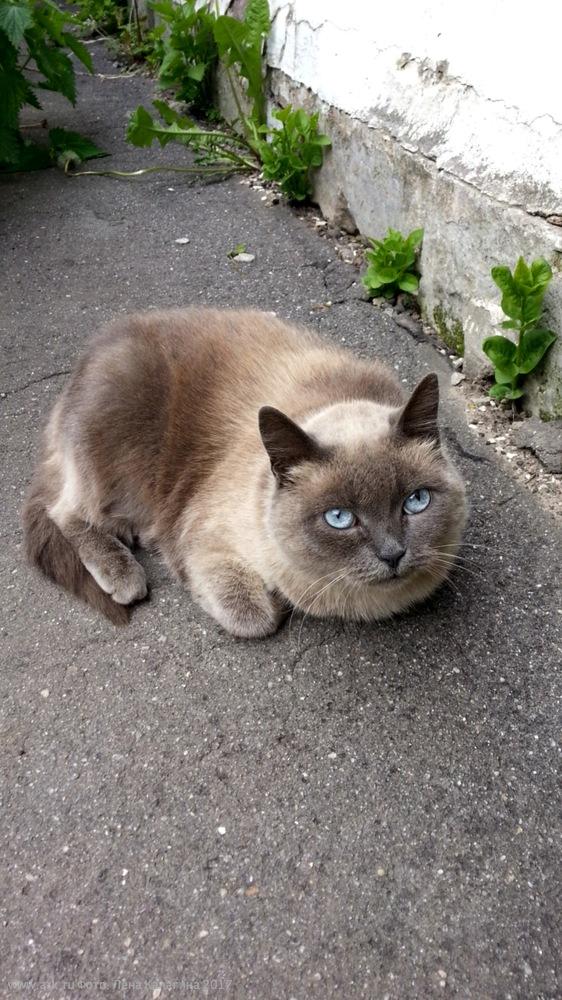 Кот в Ярославле. Фото: Лена Калагина